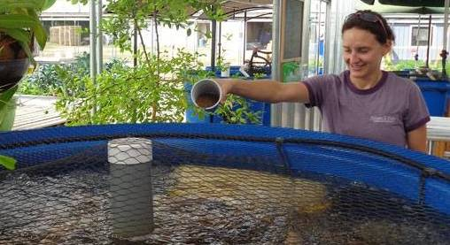 Aquaponic Growing Supplies