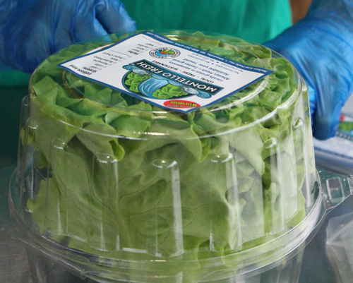 Lettuce Bags and Crispers