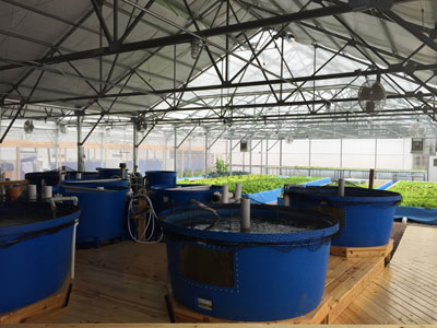 Nelson-and-PAde-comercial-aquaponics