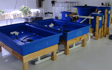 Home systems nelson pade inc for Aquaponics fish for sale