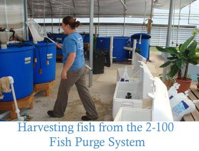 Fish-purge-system1