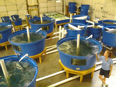Commercial systems nelson pade inc for Aquaponics fish for sale