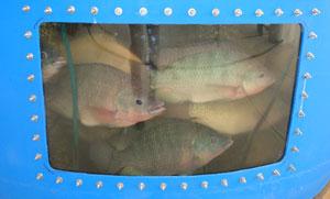 fish3001