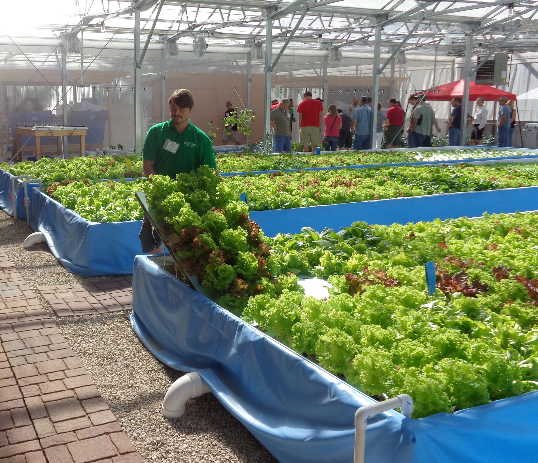 Nelson and pade inc donates lettuce to area schools for Fish farming at home