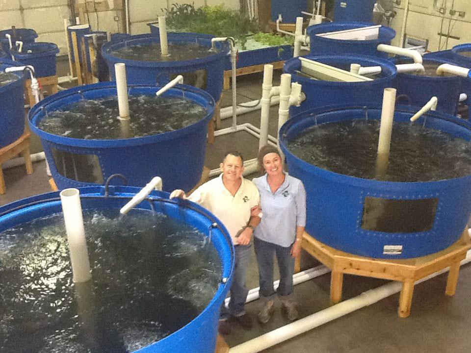 Opportunities in aquaponics nelson pade aquaponics for Aquaponics fish food