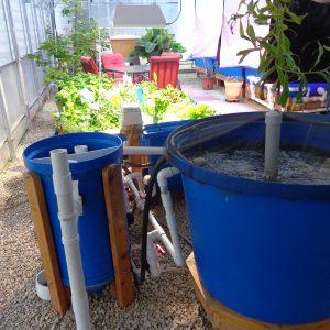 F5 aquaponic system