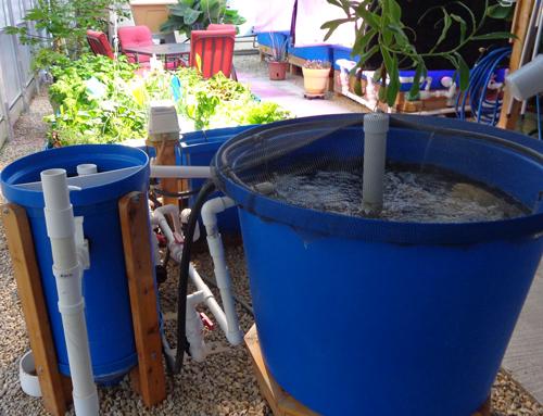 F5 aquaponc system