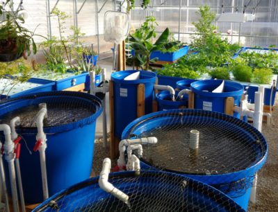 Family Plus aquaponic syste