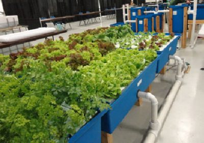 Home-Garden aquaponic system