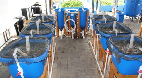 fish-Nursery-system