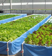 Aquaponics.com Offers World's Largest Selection for Aquaponics