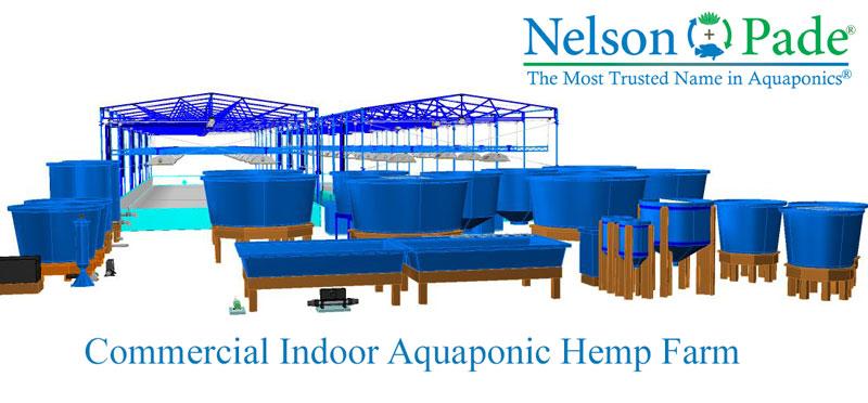 Grow hemp in aquaponics • Nelson & Pade Aquaponics