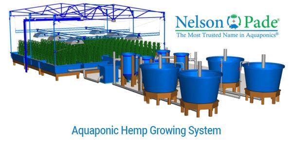 Aquaponic-Hemp-system-01