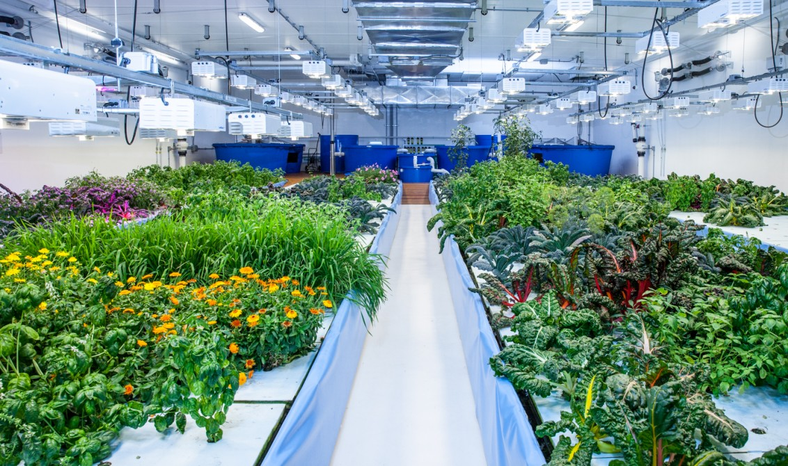 2. See a Commercial Indoor Farm in Canada