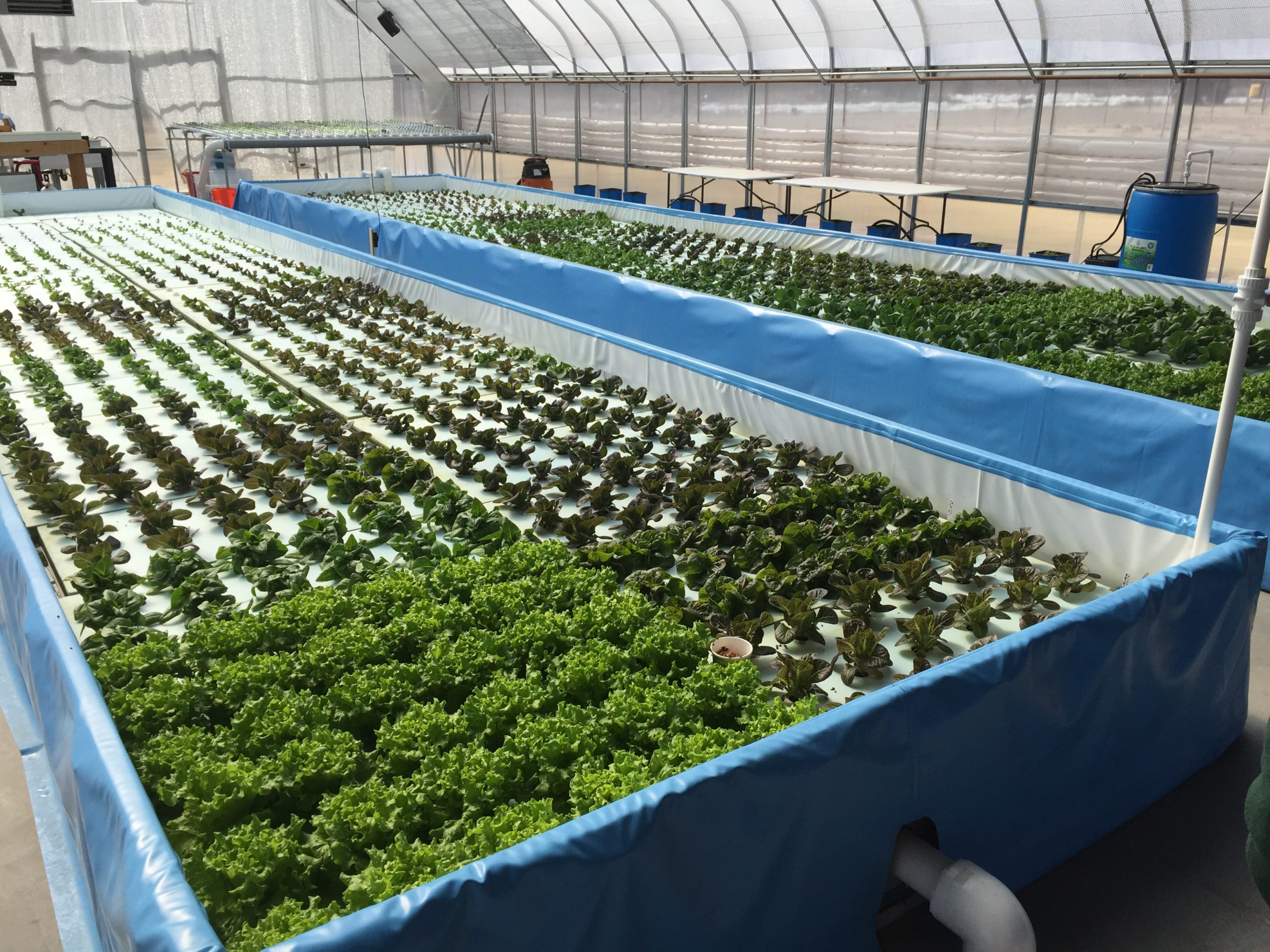 4. Arizona Aquaponic Farm Plans Expansion