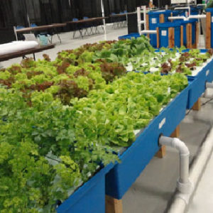 Home Garden Aquaponic System