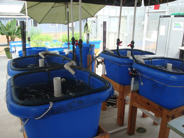 Home systems nelson pade inc for Fish farming at home