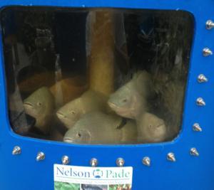 Aquaponic MicroFarm 1 fish