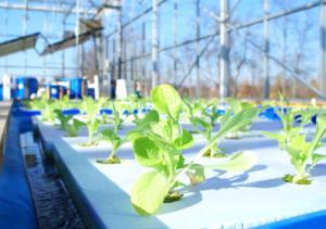 Aquaponic MicroFarm 1 in greenhouse