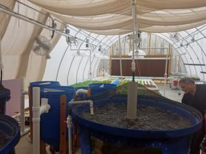 Aquaponic MicroFarm 2 fish tanks