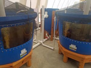 Aquaponic MicroFarm 2 tanks b