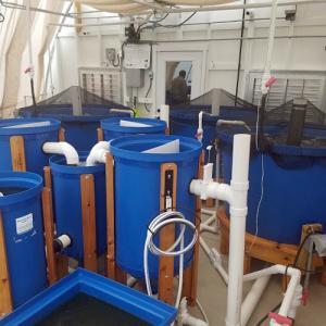 Aquaponic MicroFarm 2 tanks