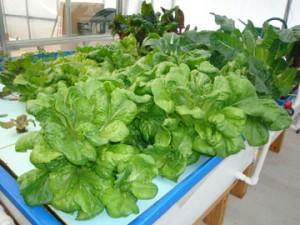 F5-with-Leafy-greens