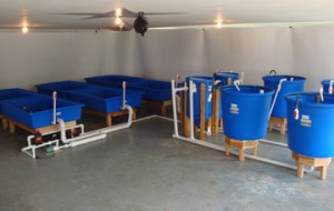 Family-Plus-4-100-gal-fish tanks, filters and 6-4x6 grow beds