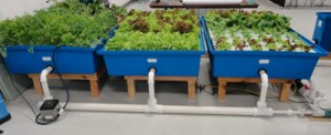 Home-Garden-Aquaponic-syste